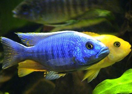 разведение рыбок